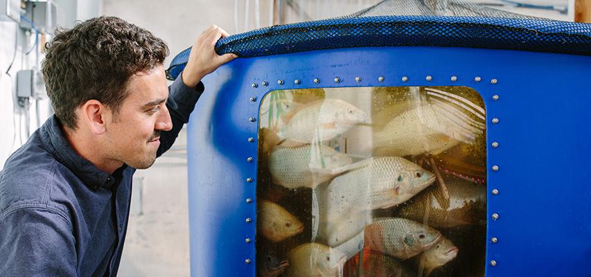 Edenworks' aquaponic urban farming system