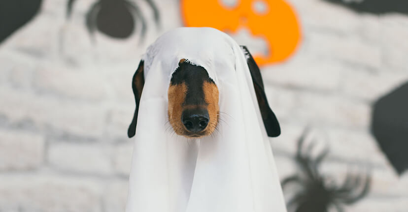 Dog in ghost costume
