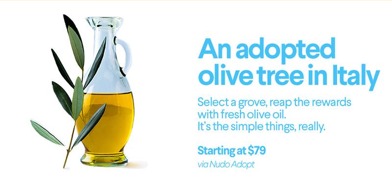 adopt olive tree