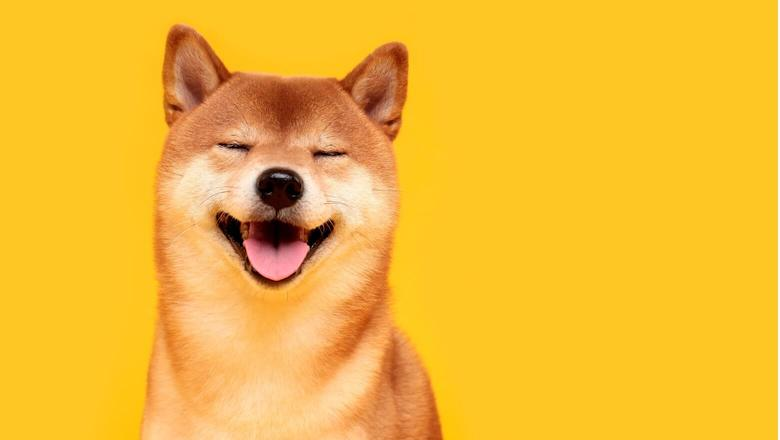 What is Dogecoin? A Guide to the Original Meme Crypto