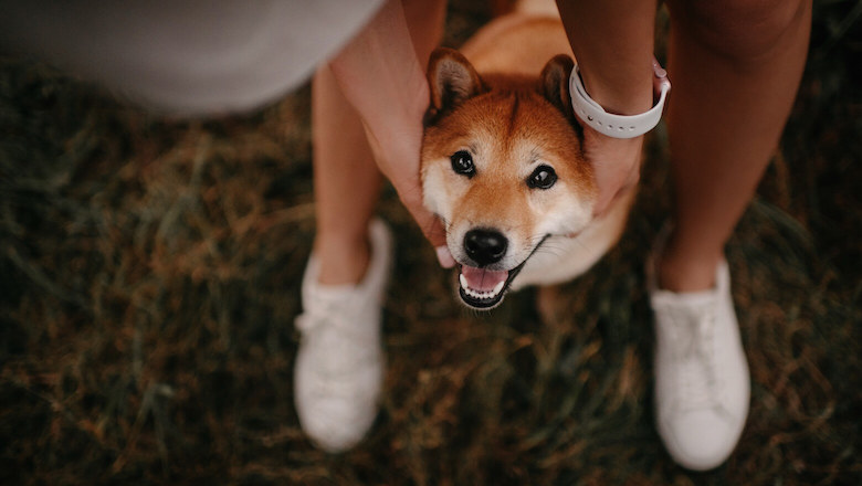 What Companies Accept Dogecoin and Other Cryptos as Payment?