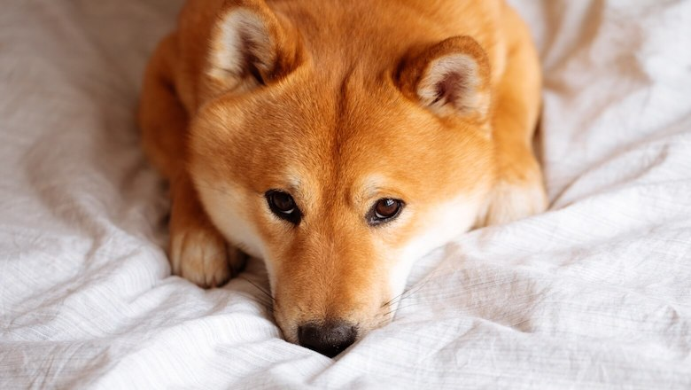 Will Dogecoin Ever Be Capped?