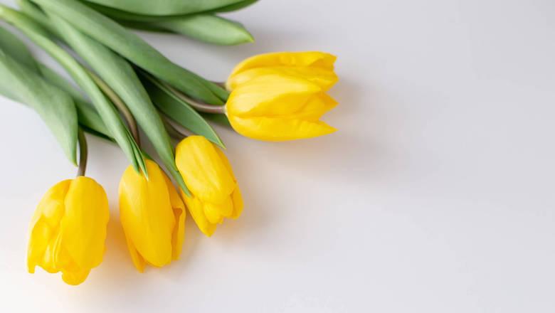 What Happened During Tulip Mania?