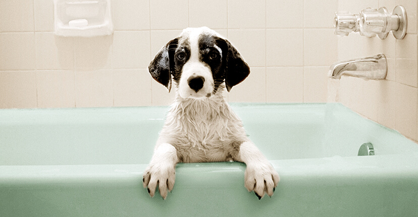 dog in a bathtub