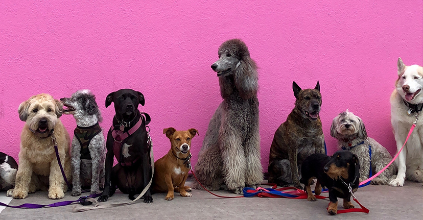 dogs on a pink wall